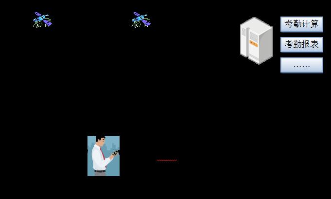 柚子的组织结构